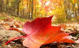 У Тернополі ловитимуть і штрафуватимуть паліїв листя