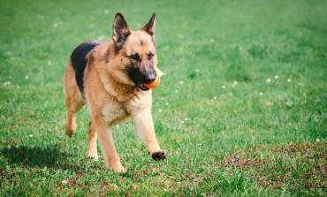 На Тернопільщині 4 собаки-рятувальники