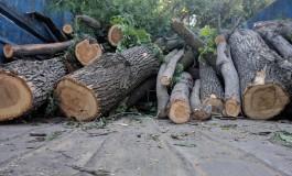 З 1 січня на Тернопільщині збільшуються штрафи за незаконну вирубку дерев