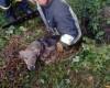 У селі на Тернопільщині із закинутого колодязя витягнули собаку (фото)
