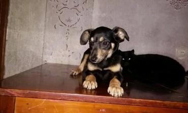 На Тернопільщині собаці потрібна допомога