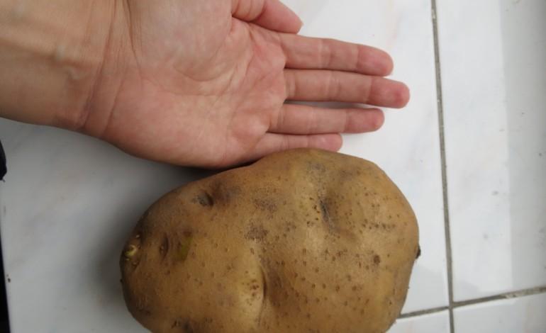 З однієї картоплі миска дерунів