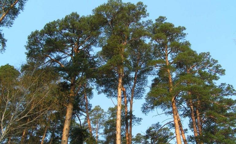 Крадені дерева відправляли закордон