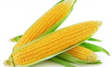 Четверо злодіїв спокусилися на соняшник і кукурудзу